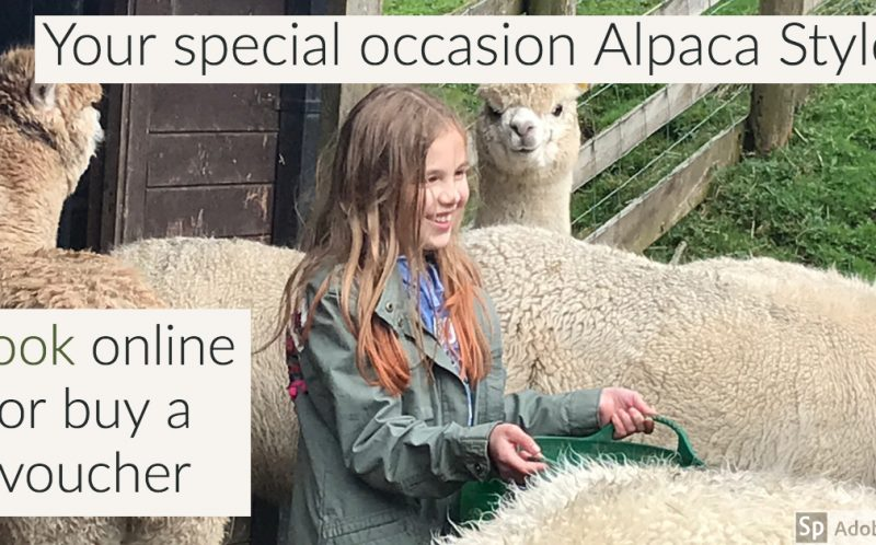 special occassion alpaca style